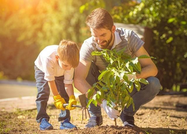 мужчина посадить дерево а женщина